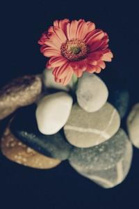 flower-942376_1920